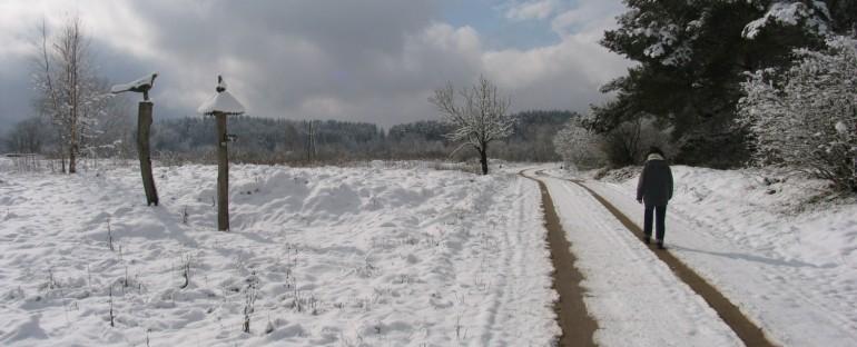 """2015-02-22 žygis """"Išskirtiniai medžiai ir kalvos"""""""
