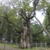 Balsuokite už 2017 metų Europos medį
