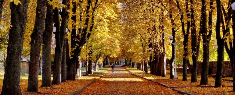 Kaštonų alėjos medžiai bus išsaugoti