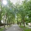 Pristatomas Kaštonų alėjos medžių būklės tyrimas, 2018.04.09