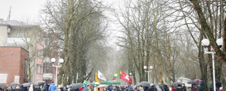 Šiauliečiai gina ir savo ir Lietuvos medžius
