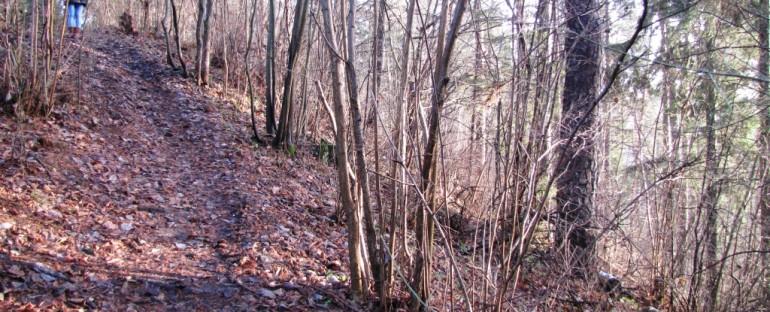 Barsukyno ozas paskelbtas valstybės saugomu gamtos paveldo objektu